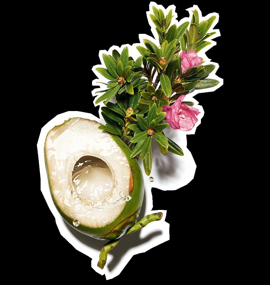Ingrediente água de coco e extrato de azevinho de mar alpinos