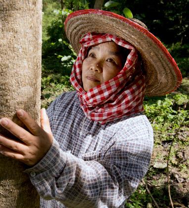 Plantámos 400 000 árvores