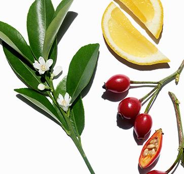 Visual de ingredientes e plantas