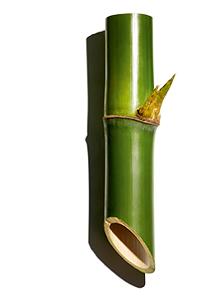 Pó de bambu
