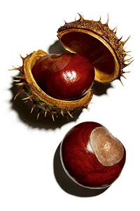 escina de castanha-da-Índia: